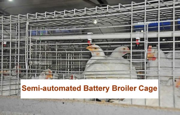 Semi-automated Battery Broilers Cages
