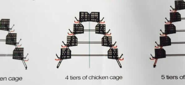 Chicken Cage Drawing