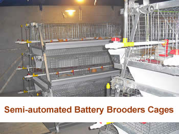 Semi-automated Battery Brooders Cages